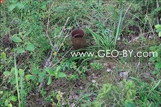 Труба закопанная в лесу