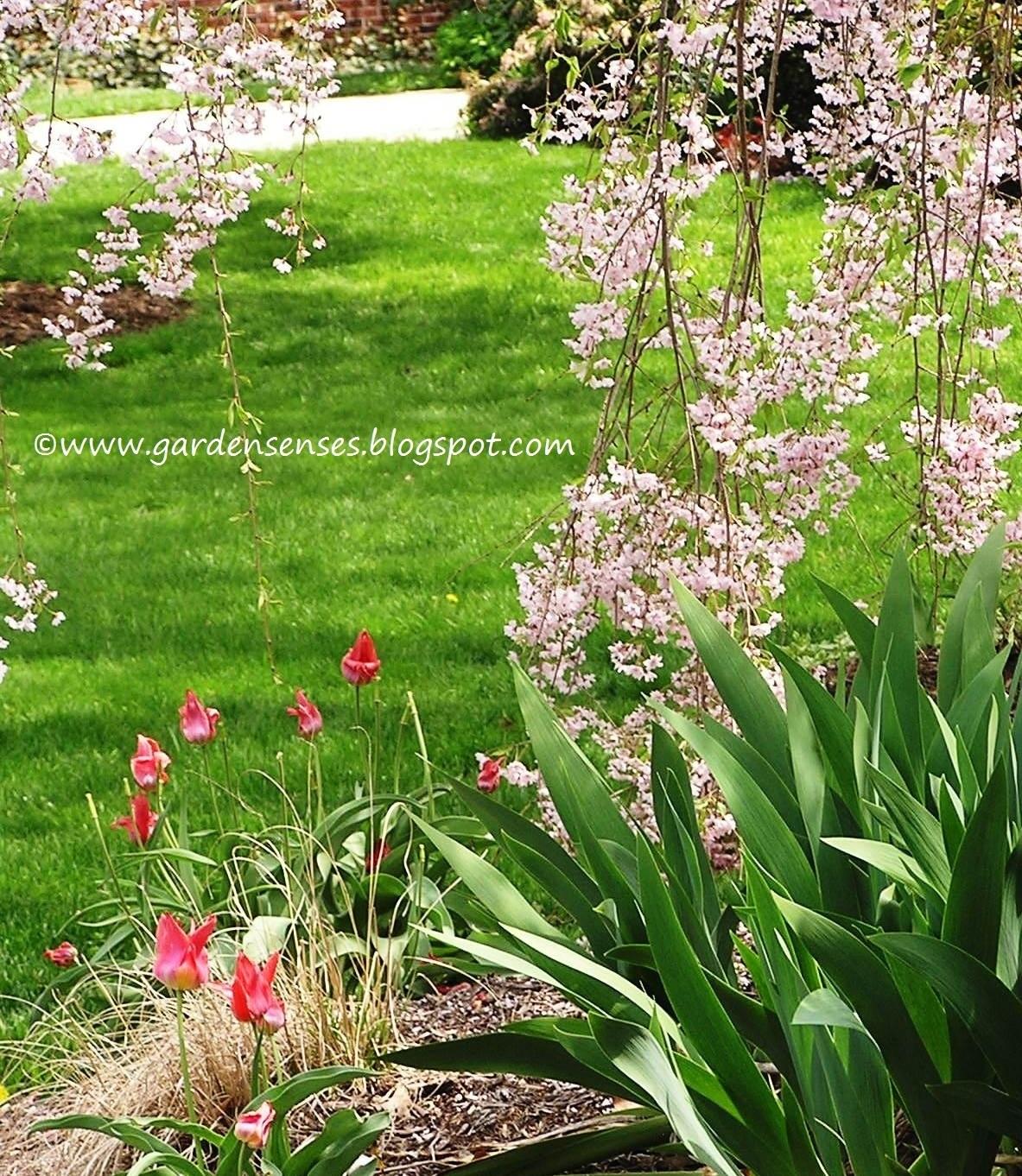 Garden Sense: Spring Combinations I