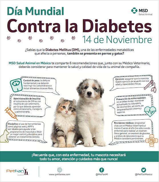 Todo lo que debes saber sobre el cuidado de las mascotas con Diabetes