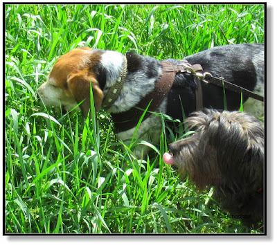 Tierisches - zwei Hunde