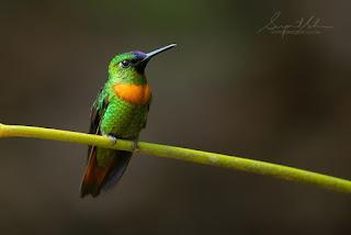 طيور جميلة ورائعة
