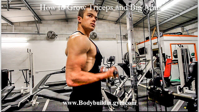 Triceps and Big Arms