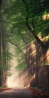 صور وخلفيات مناظر طبيعية
