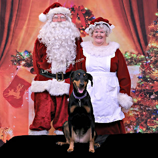 rescue doberman mix dog with santa and mrs claus