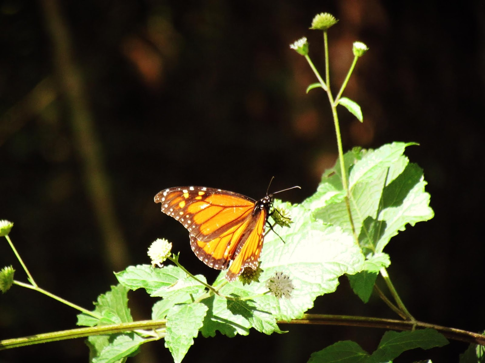 A monarch butterfly in a magical setting in an emerald green forest of enchantment