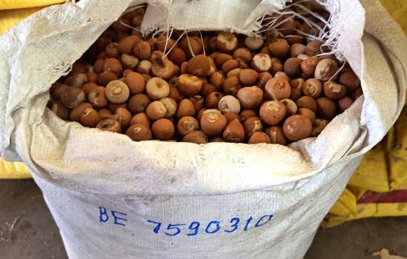 Smuggled betel nuts (Supari) worth Rs 2.55 crore seized in Guwahati, Assam