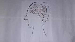 cabeça cérebro