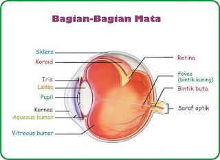 Sistem organ dan bagian - bagian Mata - bebagaireviews.com
