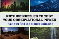Can you find the hidden animals in these puzzle picture?