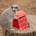 Ένα διαφορετικό γραμματοκιβώτιο για τα γράμματα στον Άη Βασίλη