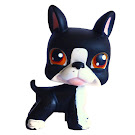Littlest Pet Shop Portable Pets Boston Terrier (#63) Pet
