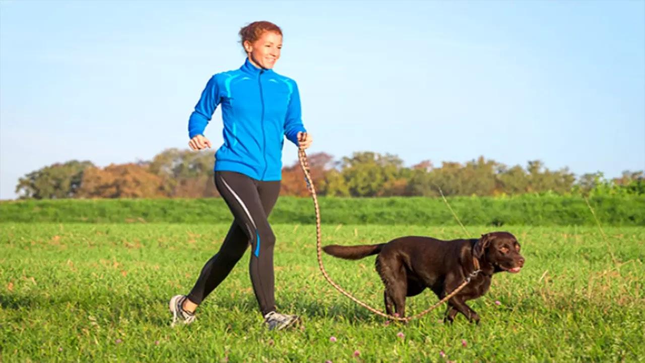 Ostéochondrose du chien : symptômes et traitement