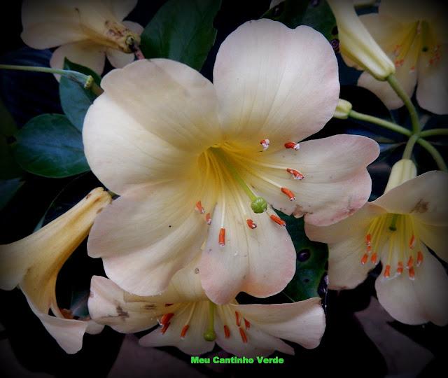 Flor branca com estames bem definidos