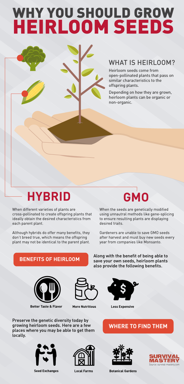 Why You Should Grow Heirloom Seeds Infographic