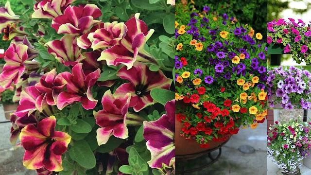 Το λουλούδι του μήνα: ΑΠΡΙΛΙΟΣ