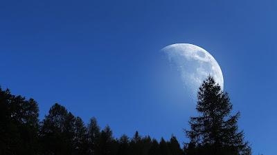 Big Moon, Trees, Sky, Night, Nature