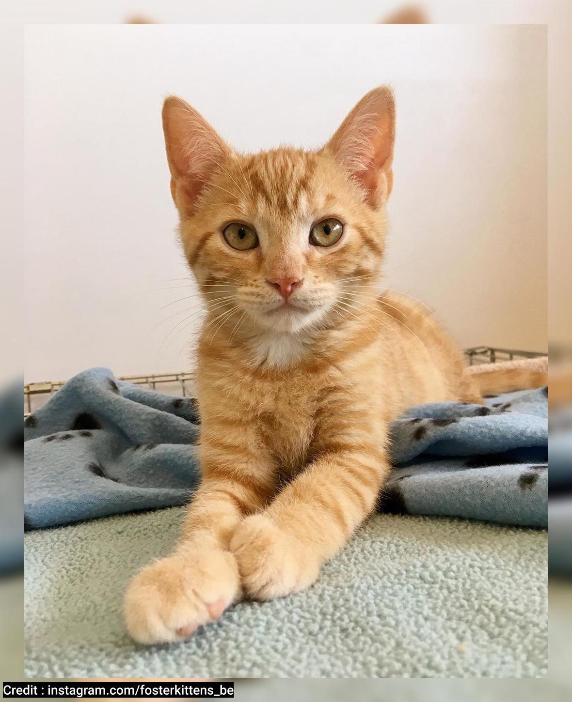 Kucing Oren Lucu Kesayangan Babu Alampedia Com