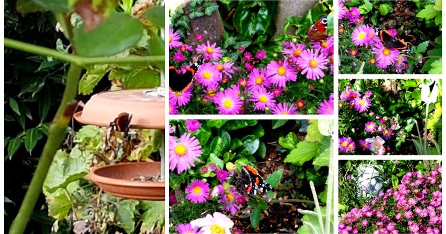 Nunu S Garn Und Stofflabor Regen Ein Schmetterling Und Ein