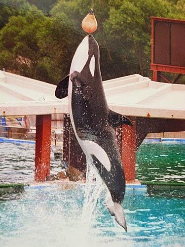 海威是永恆的經典(圖片來源﹕http://ticketsz.blogspot.hk/)