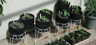 Tips to Grow Your Own Vegetables