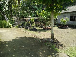 Tanah Dijual Cepat Wates Kulonprogo Yogyakarta Bonus Bangunan 2