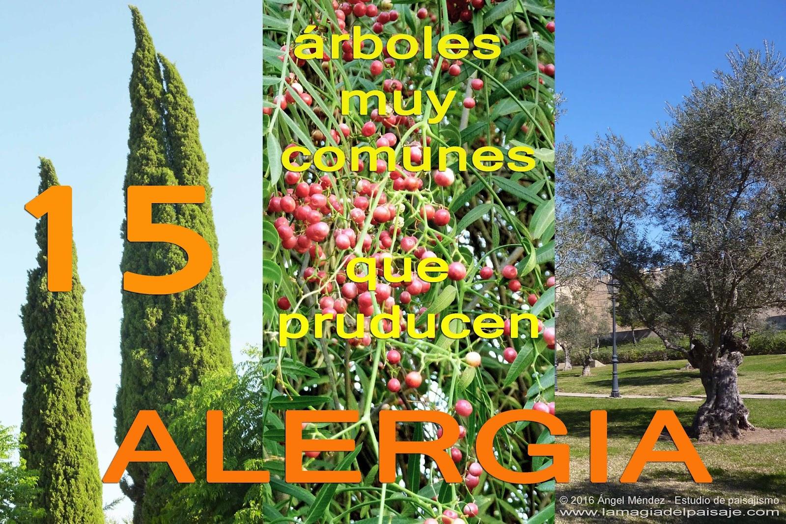 15 rboles muy comunes que producen alergia for Lista de arboles perennes