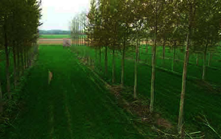 Pengertian Pemanfaatan Ruang Agroforestri