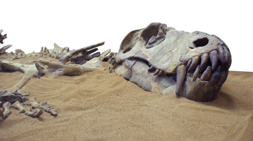 Radiometric dating dinosaur fossils in arizona