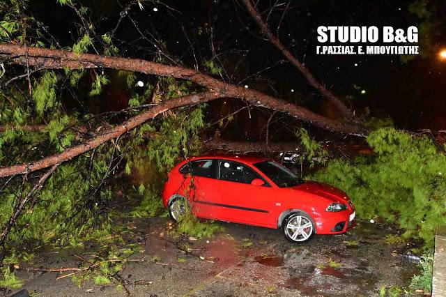 Περισσότερα από 30 πτώσεις δέντρων από την καταιγίδα στην Αργολίδα (βίντεο)