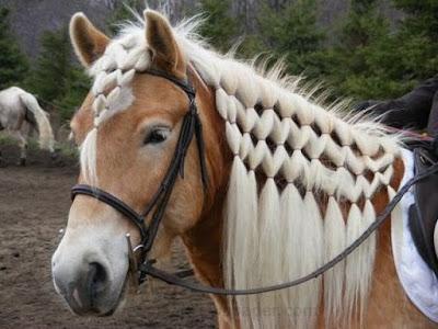 Foto trenzas en caballo