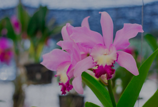 Orchid Temperature - Why So Hot and Humid?