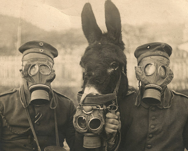 Two German soldiers and their mule wearing gas masks in WWI, 1916.