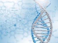 Gen, DNA, dan Kromosom-Biologi Kelas XII