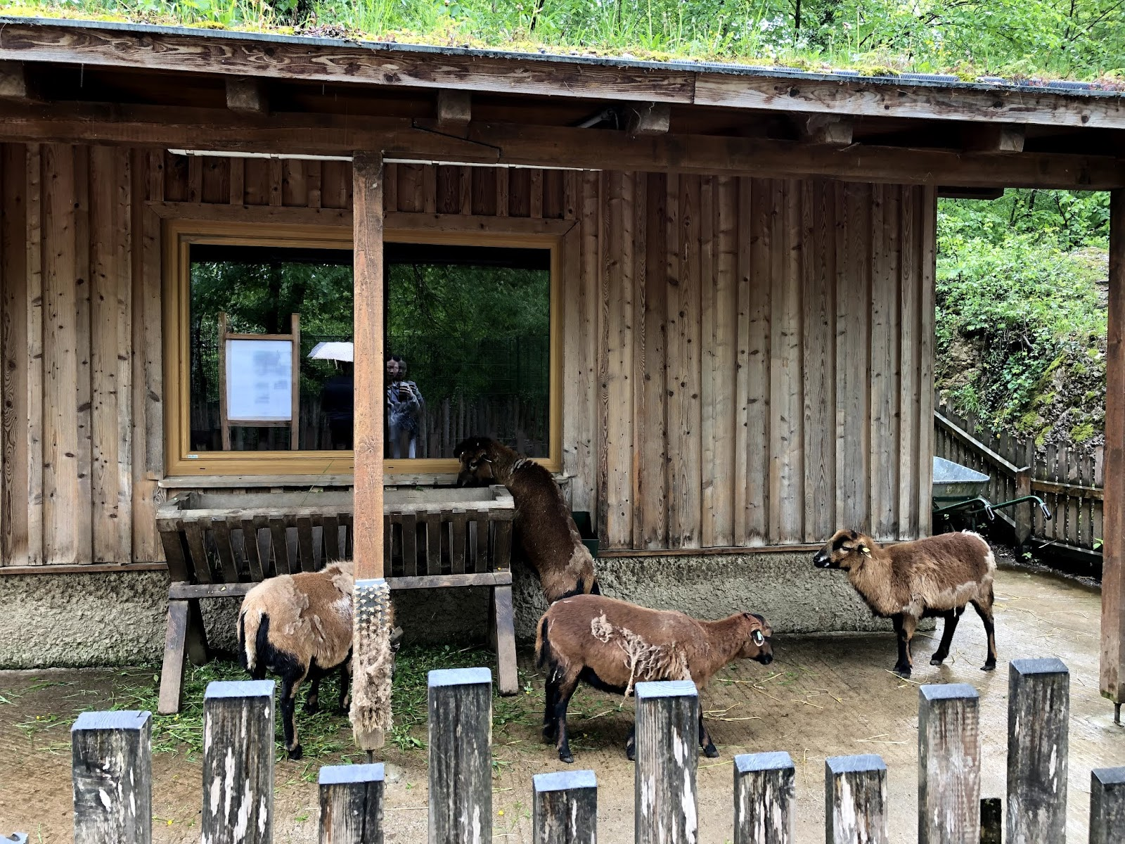 salzburg itinerary Hellbrunn Zoo