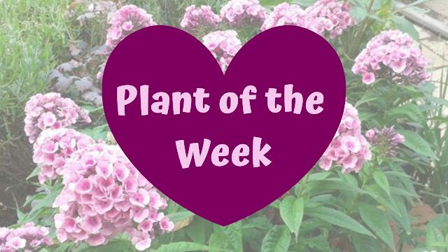 Pumpkin Becki Plant Week midweek YouTube video series