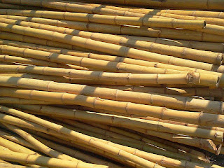 tips-memilih-bambu.jpg