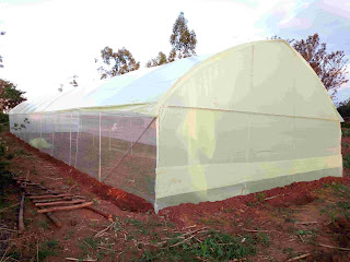 Metallic greenhouses in tarime tanzania