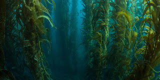 Channel Islands Kelp, California (Credit: Shutterstock) Click to enlarge.