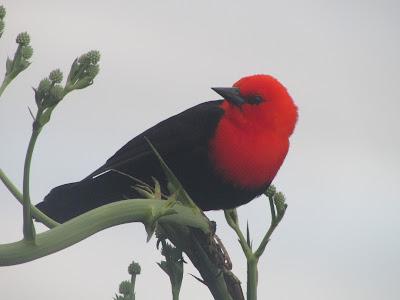 aves de Ibera
