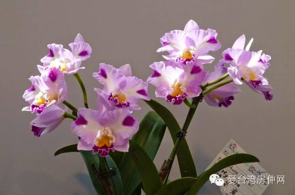Taiwan International Orchid Show Pictures Gallery