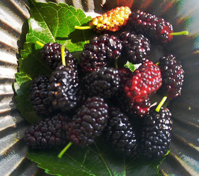 red black mulberries