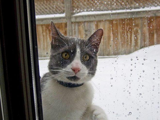 20 Смешных Фото Кошек Реагирующие На Снег