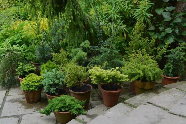 Agrupacion de plantas en macetas