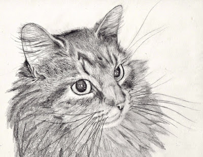 صور رسم قطة