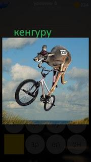 389 фото кенгуру прыгает на велосипеде верхом 8 уровень
