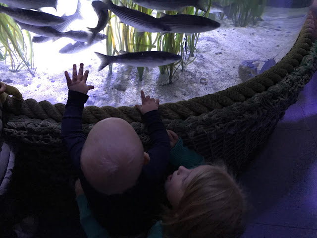 A fish tank with fish visible and a young child reaching up and pointing at them