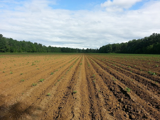 fasi lunari-luna-semina-raccotlo-agricoltura