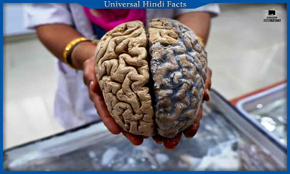 facts about human body in hindi, Human body facts, amazing facts about human body in hindi, interesting facts about human body in hindi, amazing facts about human brain in hindi, amazing facts about human eye in hindi, amazing facts about human heart in hindi,