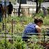 Ciudadanos pedirá la creación de huertos urbanos y su puesta en valor como recurso social, ambiental y educativo
