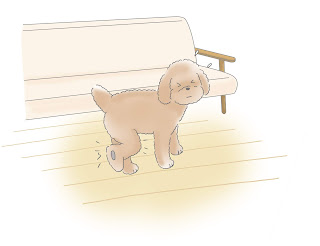 cão pulando do sofá